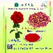 玫瑰花提取物美颜护肤浩洋生物现货直销