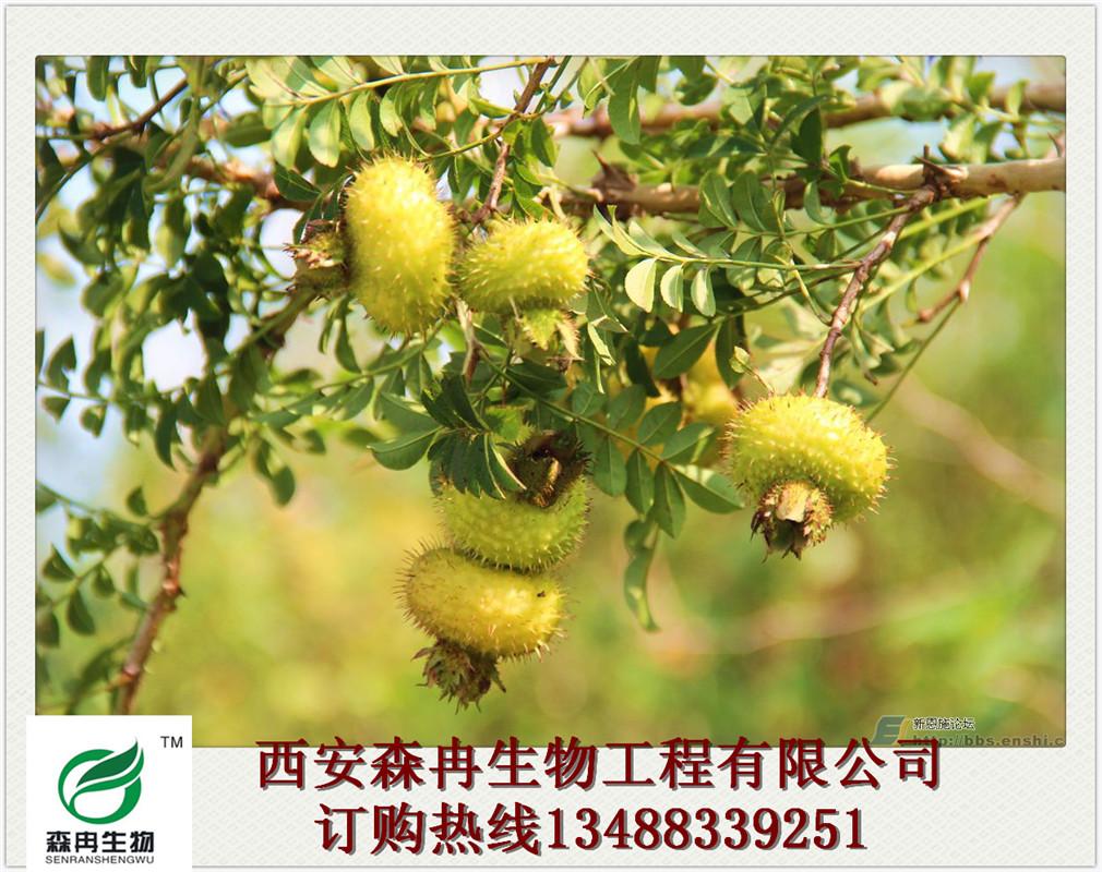森冉生物厂家热销刺梨提取物木梨子提取物天然保健品原料