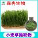 森冉生物小麥草提取物小麥苗提取物天然植物提取物粉