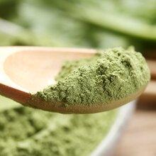 廠家直銷脫水菠菜粉散裝菠菜粉精品菠菜圖片