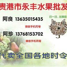 贵港市场水果批发,水果代销