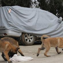 保山施甸县卖纯种马犬施甸马犬什么价格