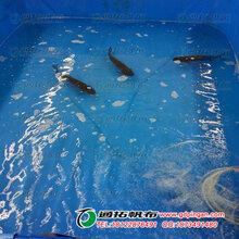 方形魚池定做_不漏水帆布魚池_養殖防水魚池圖片