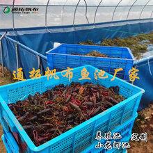 养殖鱼池采购批发市场优质养殖鱼池价格品牌/厂商图片