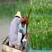 罗源县水上绿化花卉人工浮岛欢迎咨询