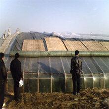 清原县养殖蔬菜防雨防寒保温被四季通用图片