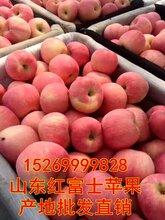 山东苹果。山东苹果价格,山东红富士苹果,红富士价格,山东苹果最新价格