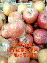 山东红富士苹果_山东红富士苹果价格_优质山东红富士苹果批发出售2017年