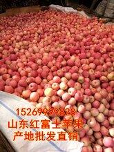 苹果价格,山东红富士苹果,山东苹果价格,红富士苹果,红富士行情,山东苹果