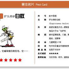 越秀区专业白蚁防治,广州越秀哪有白蚁防治公司专业