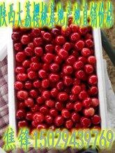 陕西樱桃种植基地产地红灯樱桃批发价格美早樱桃销售价格图片