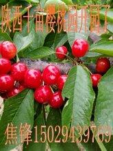 陕西樱桃批发价格红灯樱桃产地直销价格早大果樱桃销售价格图片