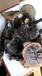常州靈芝-江蘇常州發現野生靈芝-常州野生靈芝的作用與功效
