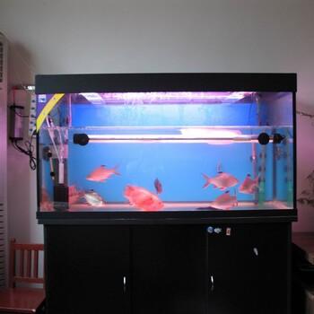 昆明鱼缸一条龙服务