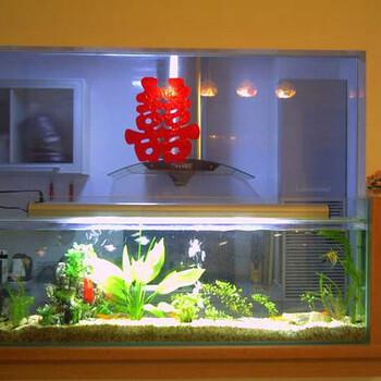 专业观赏鱼护理鱼缸清洗维护鱼缸维修等服务