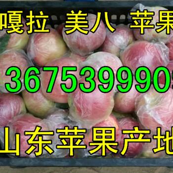 美八苹果价格哪里的便宜美八苹果今日上车价格