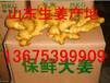 2016生姜价格行情山东鲜姜上市批发价格