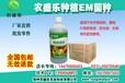 使用种植em菌液种植南瓜的用法
