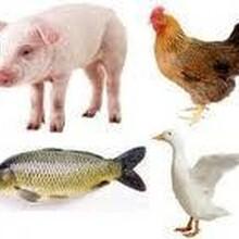 水產魚蝦飼料粘結劑預混料添加劑反芻牛羊動物禽獸寵物飼料添加劑圖片