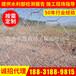 石笼网厂家铁丝石笼网箱生产基地河道铅丝石笼网生产商
