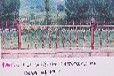 临朐华胤草坪护栏绿化栏杆花坛围栏隔离栅栏质优价低