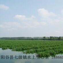 水上空心菜种子图片