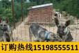 云南普洱墨江哈尼族自治哪些地方在賣賽級比熊犬
