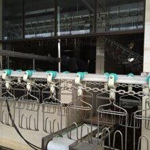 四川肉鸭屠宰流水线设备图片