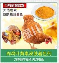天然肉鸡脂肪着色剂鸡皮鸡油着色万寿菊提取物禽蛋饲料添加剂图片