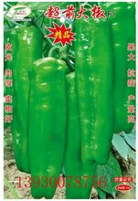 亩产万斤的牛角椒超前大椒辣椒种子图片