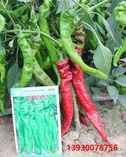 长青龙螺丝椒龙椒种子图片