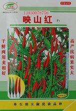 映山紅朝天椒單生朝天椒種子辣椒種子