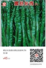 螺丝长线螺丝线椒高产辣椒种子图片