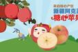 郑州冰糖心苹果专卖店丨正宗新疆冰糖心苹果