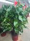 北京通州绿植出租公司图片