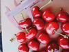天津銷售櫻桃樹批發