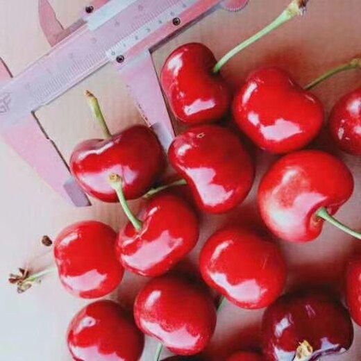 威海供应樱桃树