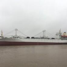 售冷藏运输船图片
