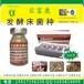 发酵床养蛇专用的菌种怎么购买