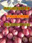 山东苹果产地山东红富士苹果产地红富士苹果价格图片
