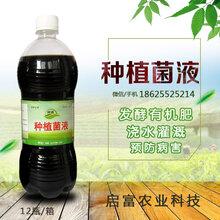 兰花肥料益生菌发酵肥料种植花卉