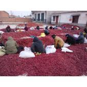 伊犁哈萨克收售干红辣椒价格