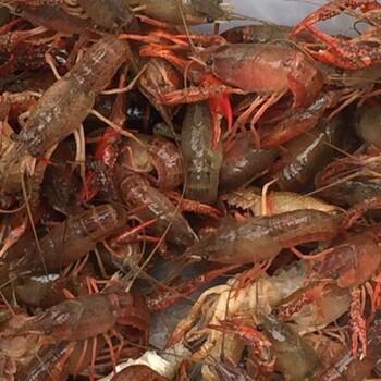 广西兴起ag系列产品 官方小龙虾热潮