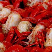 餐饮主角小龙虾在广西养殖谱写新篇章