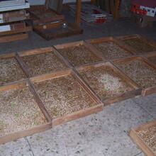 扶贫在进行,手把手教你养殖广西蛋白虫大麦虫图片