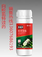 临朐高效白粉虱特效药,打白粉虱特效药的价格温室白粉虱专杀