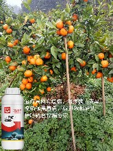 高浓度亚磷酸钾果树溃疡病杀菌剂补磷补钾营养杀菌磷钾复合肥图片
