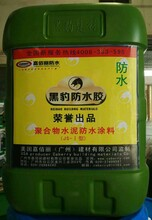 广东黑豹防水涂料多少钱一桶厨房卫生间防水K11防水涂料图片