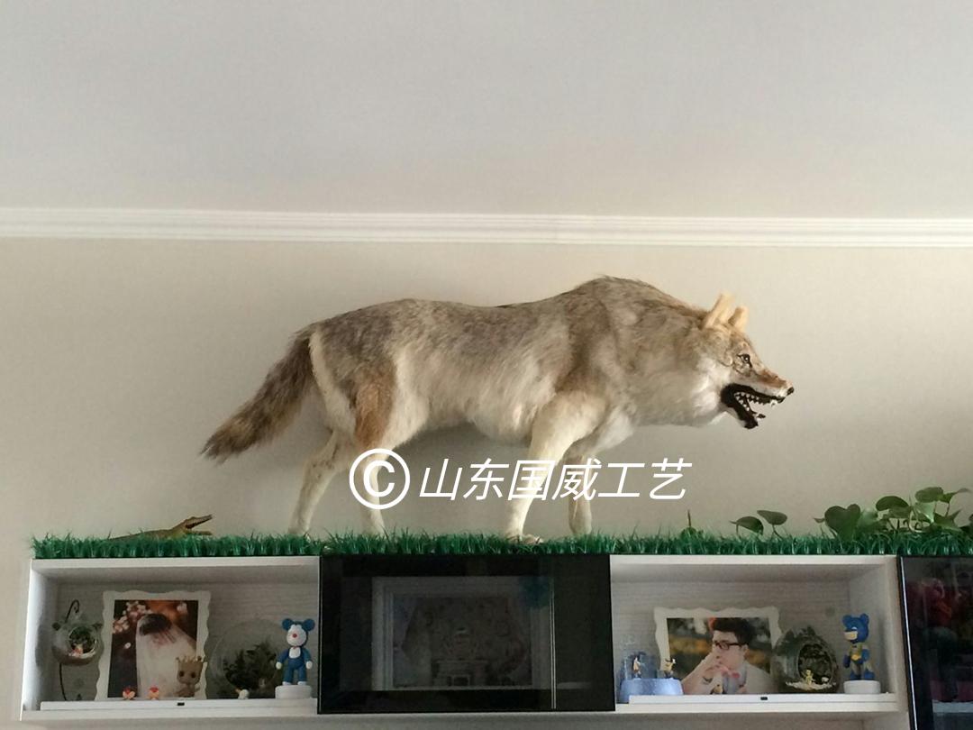 仿真狼模型玩具