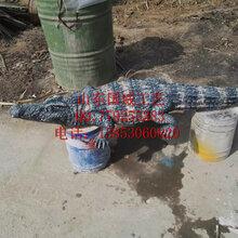 扬子鳄模型咸水鳄模型展览展示仿真鳄鱼模型